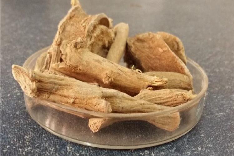 Saussurea lappa roots