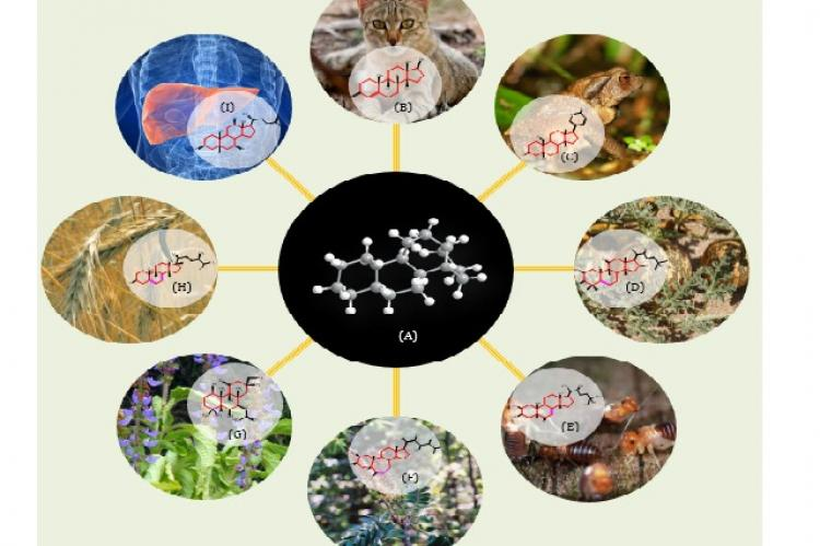 Structural Correlation of Natural Steroids in Plants, Insects, Fungi, Animals and Humans
