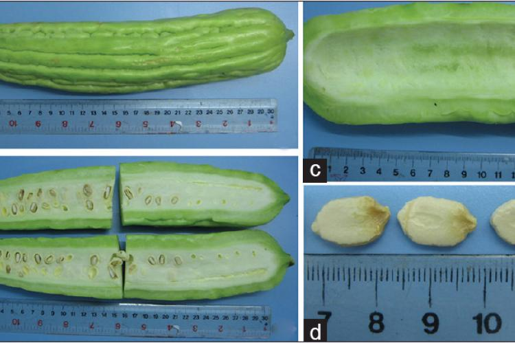 Fruit of Momordica charantia (a) external morphology, (b) cut surface, (c) pericarp, and (d) seeds