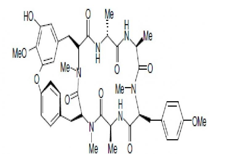 Hexapeptide of RA – series isolated from Rubia cordifolia