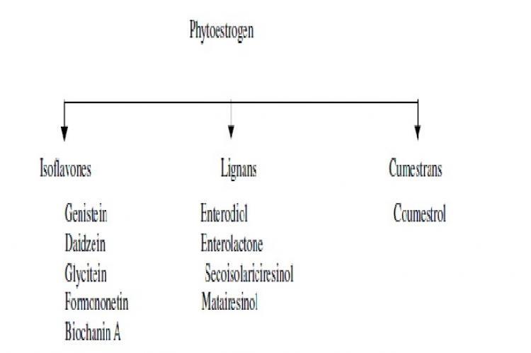 "Schematic presentation of phytoestrogens subtypes. (Modified from ref no. 2) Aglycone 7/4' Glucosyl 6""-Malonyl Isoflavone Isoflavone R1 R2 R3 R4 R5 Daidzein H H H H H Genistein 0H H H H H Glycitein H 0Me H H H Formononetin H H H H Me Biochanin A 0H H H H Me Figure 2: Structural interpretation of isoflavones, estradiol and tamoxifen. R3O R2"