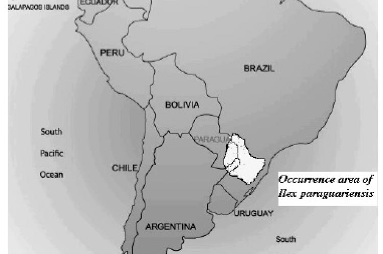 Occurrence area of mate (Ilex paraguariensis).