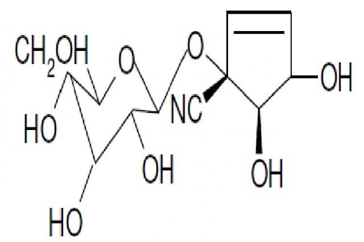 Gynocardin