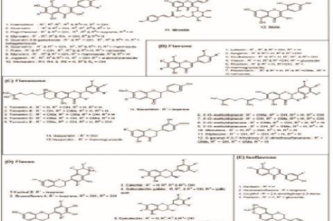 Structures of polyphenols with anti-HCoV activities