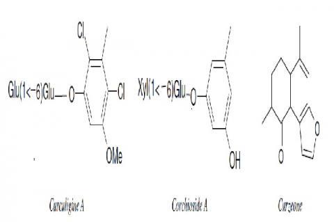 Common phytoconstituents of Curcuma longa