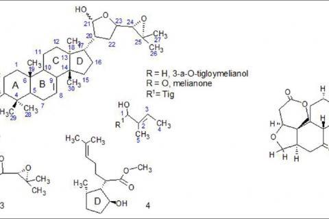 Molecular structure of triterpenoid