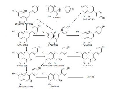 Different classes of flavonoids and their possible interchangeability