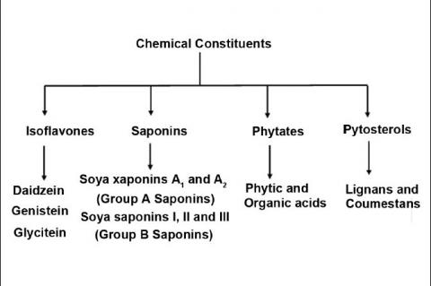 Different chemical constituents in soya bean