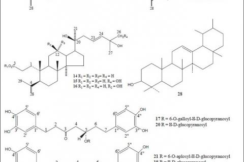 Chemical structures of compounds isolated from genus Alnus