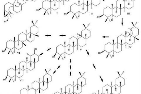 Biosynthetic pathways followed by Taraxasterol