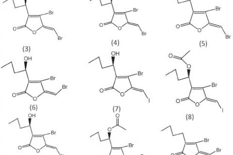 Halogenated furanones obtained from algae as antifungal agents