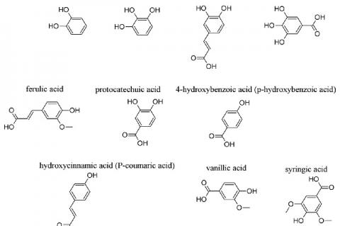 Structures of some phenols and phenolic acids