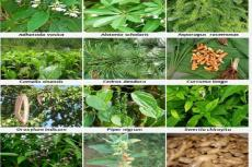 Anti-inflammatory and anti-arthritic medicinal plants of the Eastern Himalayas